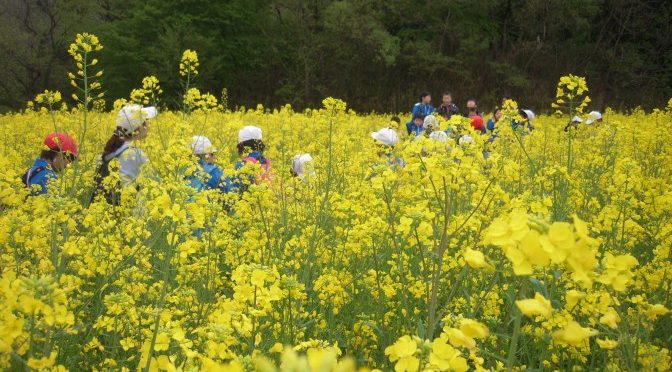 小野田小の子供たちが菜の花畑にやってきました