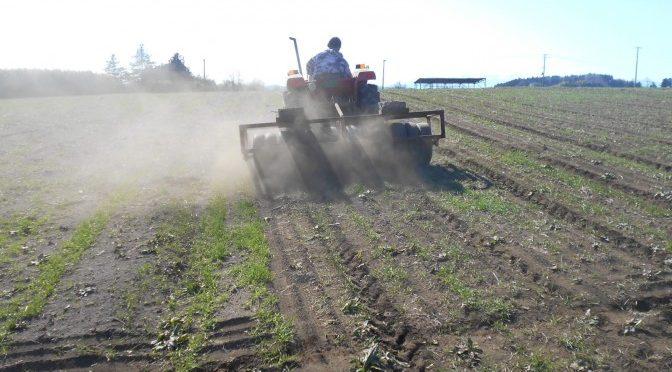 今年最初の農作業