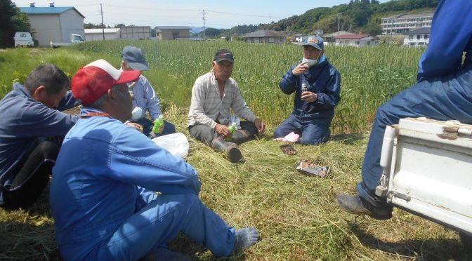 小麦の防除作業
