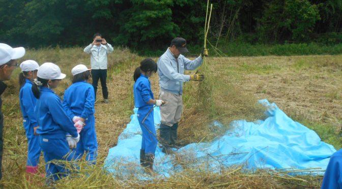 小野田小学校の子どもたちが菜種の刈り取りに来てくれました