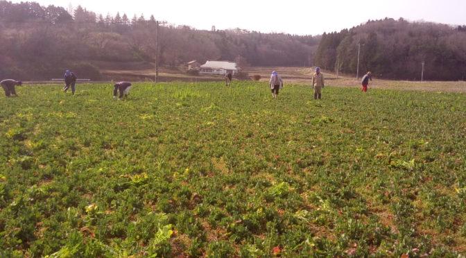 「菜の花まつり」は実施しません/今年の農作業開始