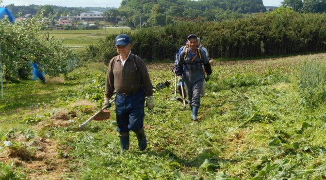 畑の草刈り作業を行いました
