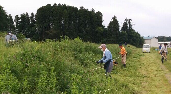 畑の草刈り、また草刈り